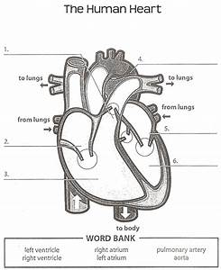 Diagram Of Heart With Labels Simple Simple Diagram Of