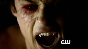 damon,elena,stefan - The Vampire Diaries Photo (32255113 ...