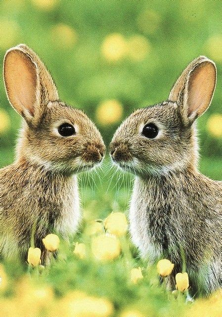 1000 images about cute bunnies on pinterest