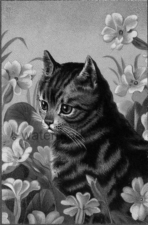 vintage cat kitten flowers grayscale coloring page adult