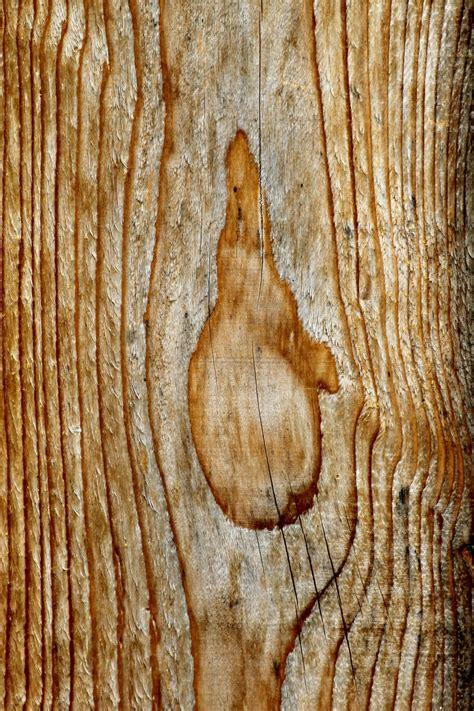 รูปภาพ : ต้นไม้, ธรรมชาติ, โครงสร้าง, ปลูก, เนื้อไม้ ...