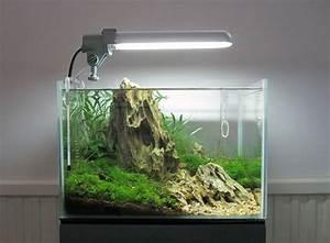 Süßwasserfische Fürs Aquarium : die besten 25 nano aquarium ideen auf pinterest nano ~ Lizthompson.info Haus und Dekorationen