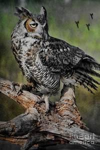Great Horned Owl On Branch Photograph by Deborah Benoit