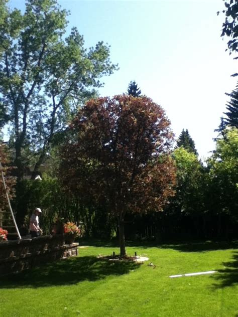 aspen tree service canpages