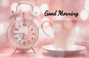 morning wishes images  red rose good morning