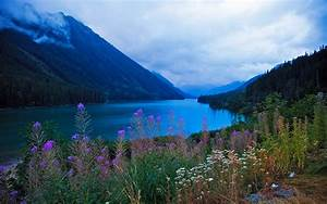 Beautiful, Scenery, And, Mountainous, River, Flowers, Green, Trees, Vegetation, Hd, Wallpapers
