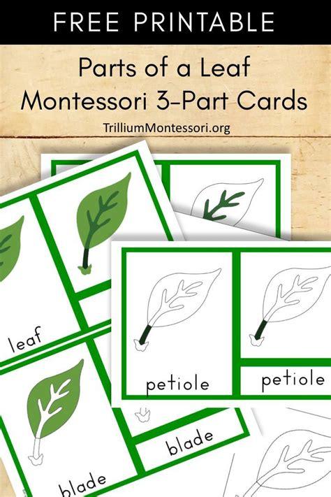 montessori printable parts   leaf  images