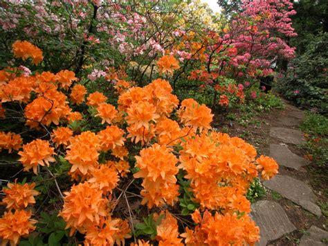 Culture Du Rhododendron