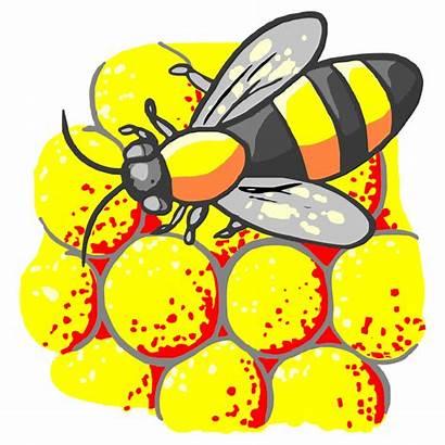 Lebah Madu Gambar Bee Sari Serbuk Pollen