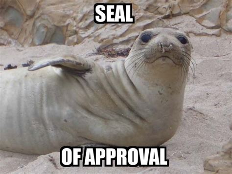 Seal Of Approval Meme - sad seal adviceanimals