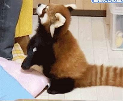Pandas Adorable Panda Cutest Animal Ever Ridiculous