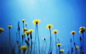 Blue Yellow Flowers 27 Cool Wallpaper - HdFlowerWallpaper.com