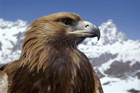 Animal Planet Wallpaper - animal planet images eagle hd wallpaper and background