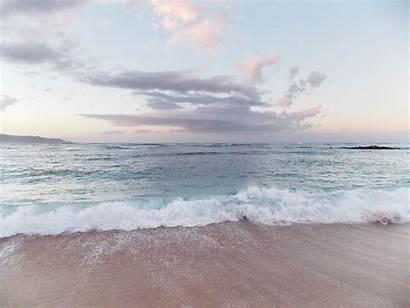 Aesthetic Beach Hawaii Ocean Summer Nature Flower
