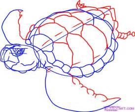 How to Draw a Sea Turtle by Step