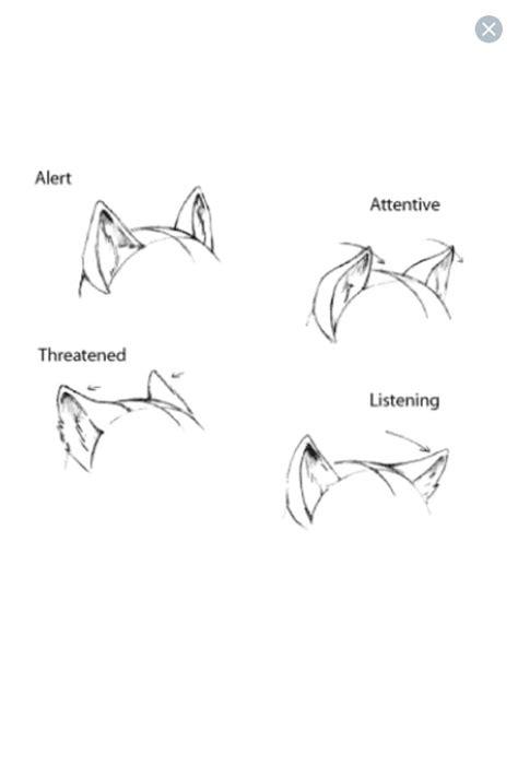 ear expressions furryanthro tutorials dessin dessin