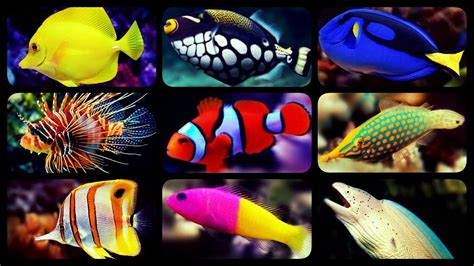 types  saltwater aquarium fish coral reef tank fish