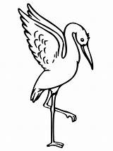 Stork Coloring Pages Baby Getcoloringpages Fox Bundle sketch template