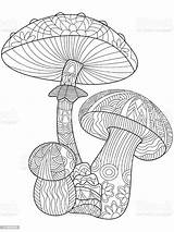 Coloring Mushroom Adults Vector Abstract Adult Pages Illustration Vectors Wildlife Animal sketch template