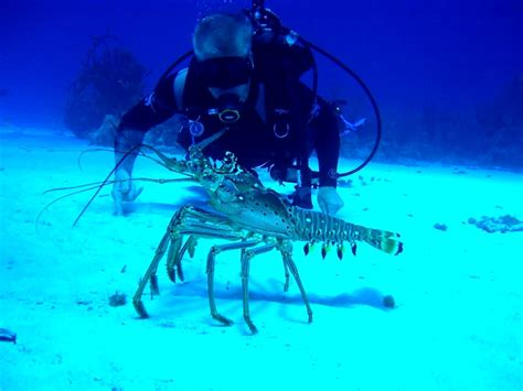 Best Dive Spots In The Caribbean by Cayman Islands