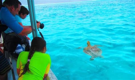Glass Bottom Boat Moorea by Moorea Activities Attractions And Things To Do Tahiti