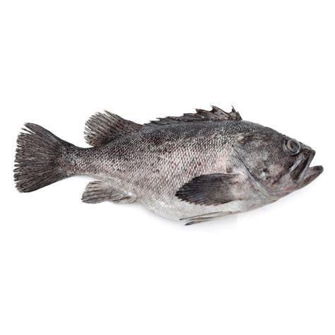 grouper fresh bottomfish bass sea upu fish hapu hilo