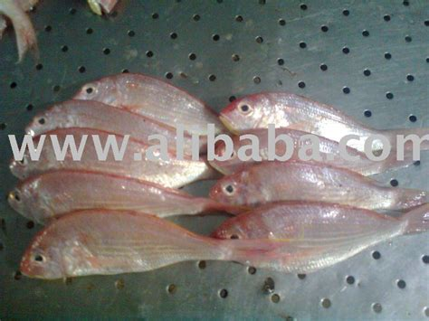 baked sea fish productschina baked sea fish supplier