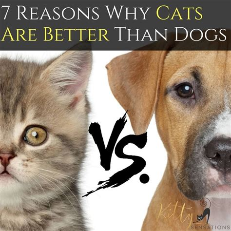 cats better dogs vs than why cat dog argument reasons