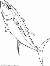 Tuna Coloring Drawing Pages Yellowfin Fish Mahi Line Drawings Google Animal Colouring Ocean Sea Getdrawings Tattoos Template Cool 720px 46kb sketch template