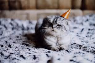 cat birthday cats cuddling carrot cake happy birthday to me