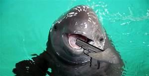 Dolfijnenshow brugge hotels