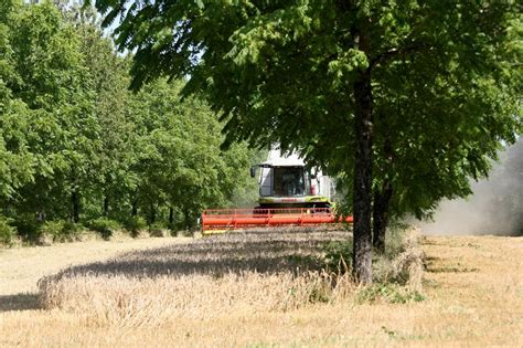 chambre agriculture haute marne agroforesterie l 39 agroforesterie s 39 implante en haute marne