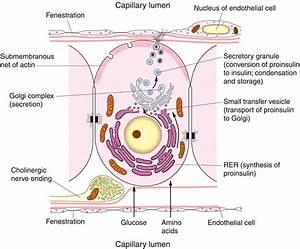1 2 Ultrastructure Of Cells  Hl