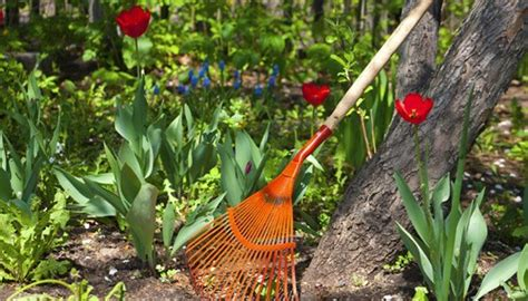 Erdbeeren Im Garten Winterfest Machen by Was Ist Mulchen Was Ist Mulchen Was Ist Mulchen