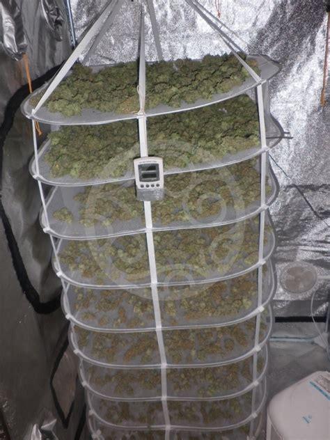 chambre de sechage cannabis sécher et affiner le cannabis philosopher seeds
