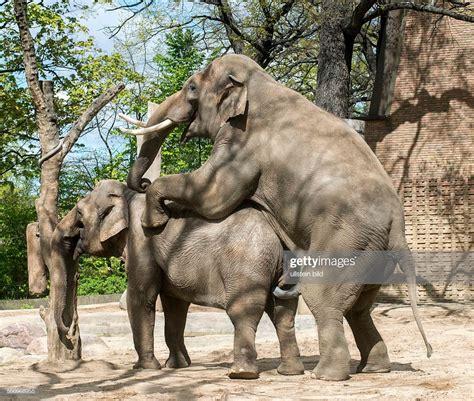 Zoologischer Garten Berlin News by Zoologischer Garten Fruehlingsgefuehle Bei Den Elefanten