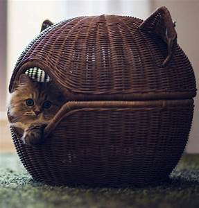 spoil your 27 creative and cozy cat beds digsdigs
