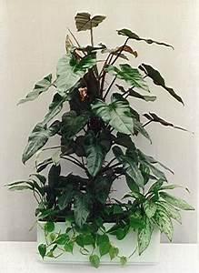 Pflanzen Für Gesundes Raumklima : zimmerpflanzen f r ein gesundes raumklima ~ Indierocktalk.com Haus und Dekorationen
