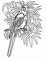 Parrot Coloring Pages Tropical Bird Realistic Hawaii Female Beach Colouring Parrots Printable Animal Cute Print Grown Ups Getcolorings Template sketch template