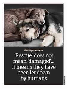 U0026, 39, Rescue, U0026, 39, Does, Not, Mean, U0026, 39, Damaged, U0026, 39, It, Means, They, Have