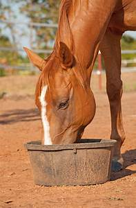 Complete Feeds For Horses