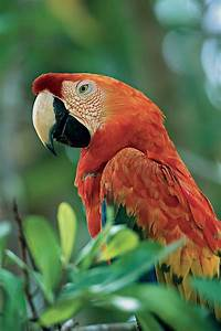Discover the Peruvian #Amazon and join naturalist Claudio ...
