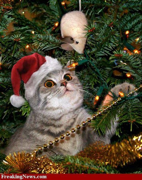 christmas cat in tree holiday christmas pinterest