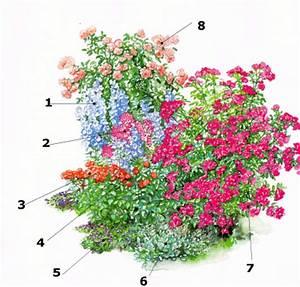 Rosenbeet Mit Stauden : rosenpartner begleitpflanzen f r rosen wichtige voraussetzungen ~ Frokenaadalensverden.com Haus und Dekorationen