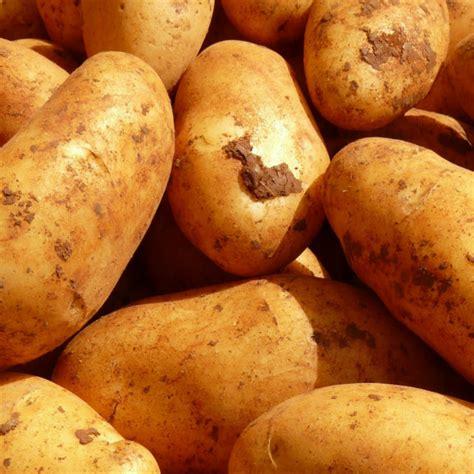 culture r 233 colte et conservation des pommes de terre