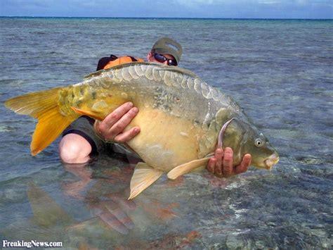 Bid Fish Big Fish Pictures Gallery Freaking News