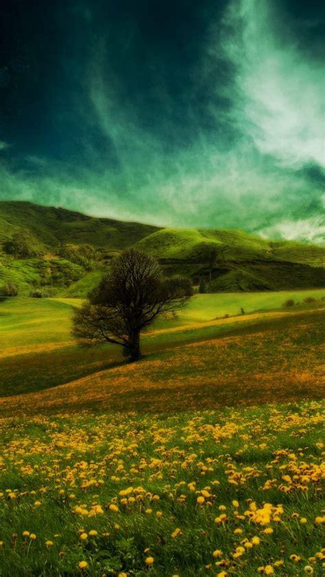 wallpaper  field hills flowers