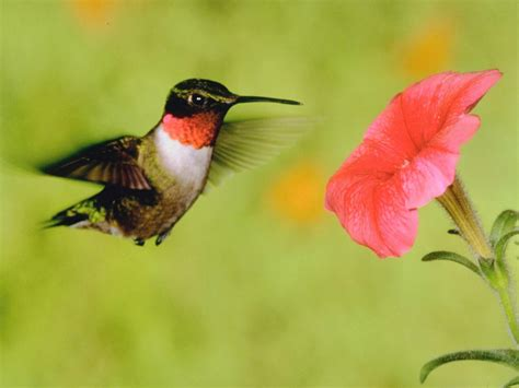 hummingbird  hgtv