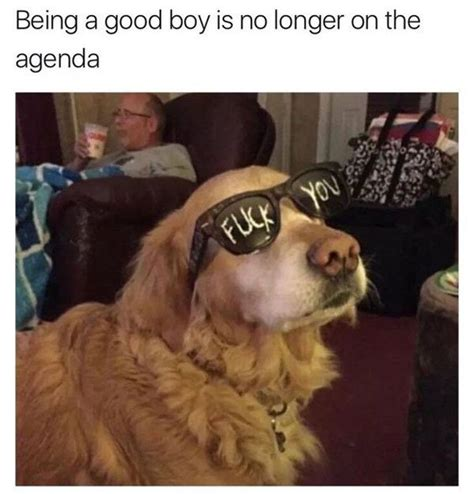 Good Boy Memes - f k yeah friday 38 photos thechive