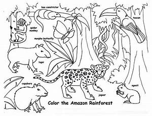 Amazon Rainforest Animals Coloring Page   HS: Country ...